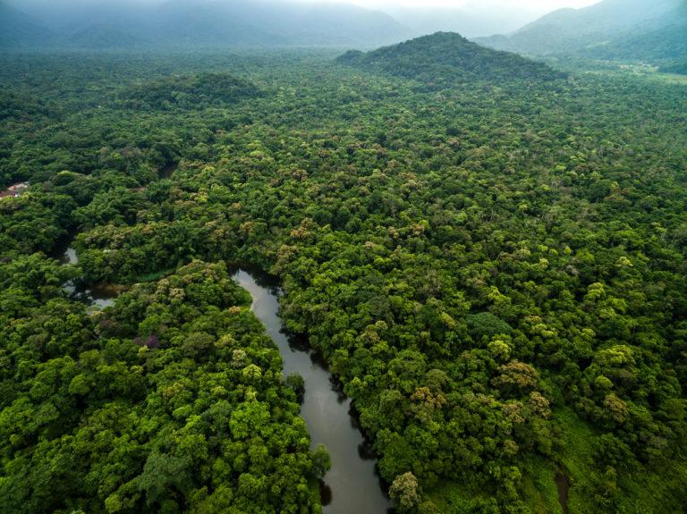 A dark river winds through a green expanse of Amazon rainforest