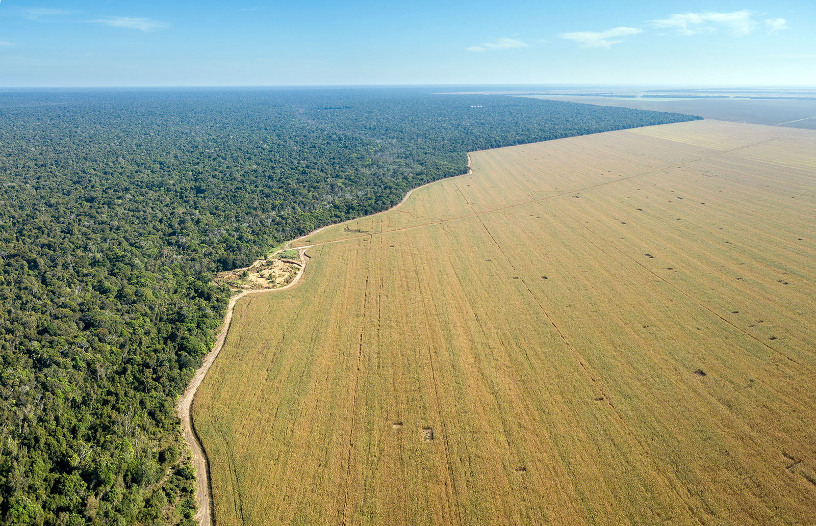 Aerial view of deforestation next to the Xingu indigenous territory in the Amazon rainforest, Brazil