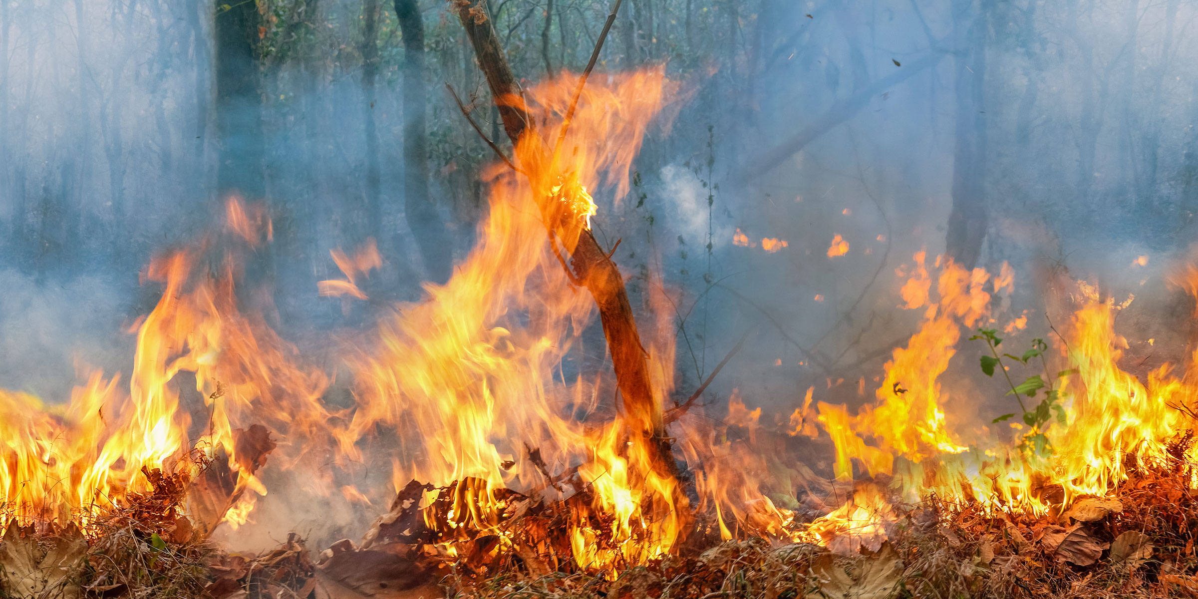 A line of flames consume underbrush in the Amazon rainforest